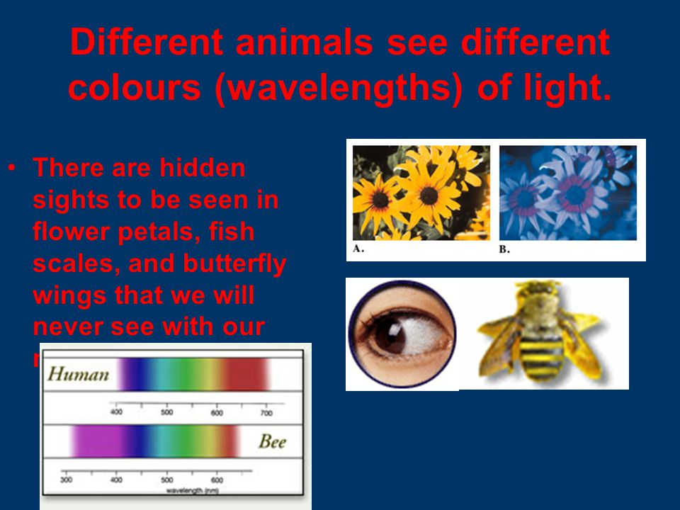 Different animals see different colours (wavelengths) of light.