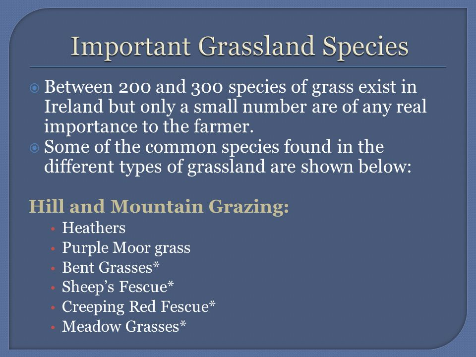 Permanent Grassland:  Bent Grasses*  Fescues*  Meadow Grasses*  Cocksfoot*  Meadow Fescue*  Timothy*  Perennial Ryegrass***  White Clover**