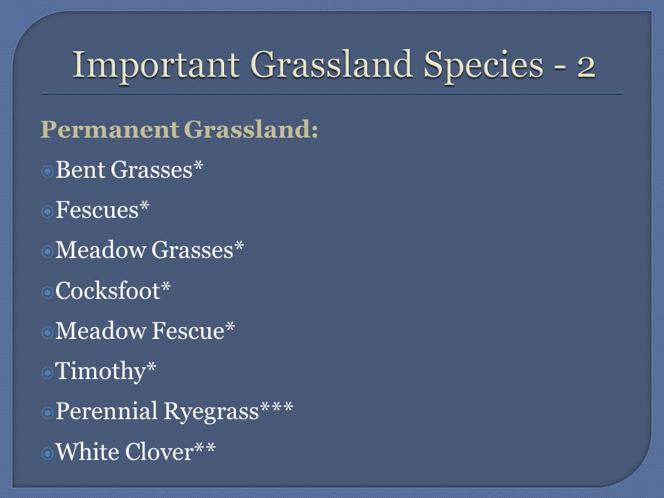 Leys:  Cocksfoot*  Timothy*  Perennial Ryegrass***  Short Duration Ryegrasses***  White Clover**  Red Clover**  The asterisks determine the palatability and productivity of the species.