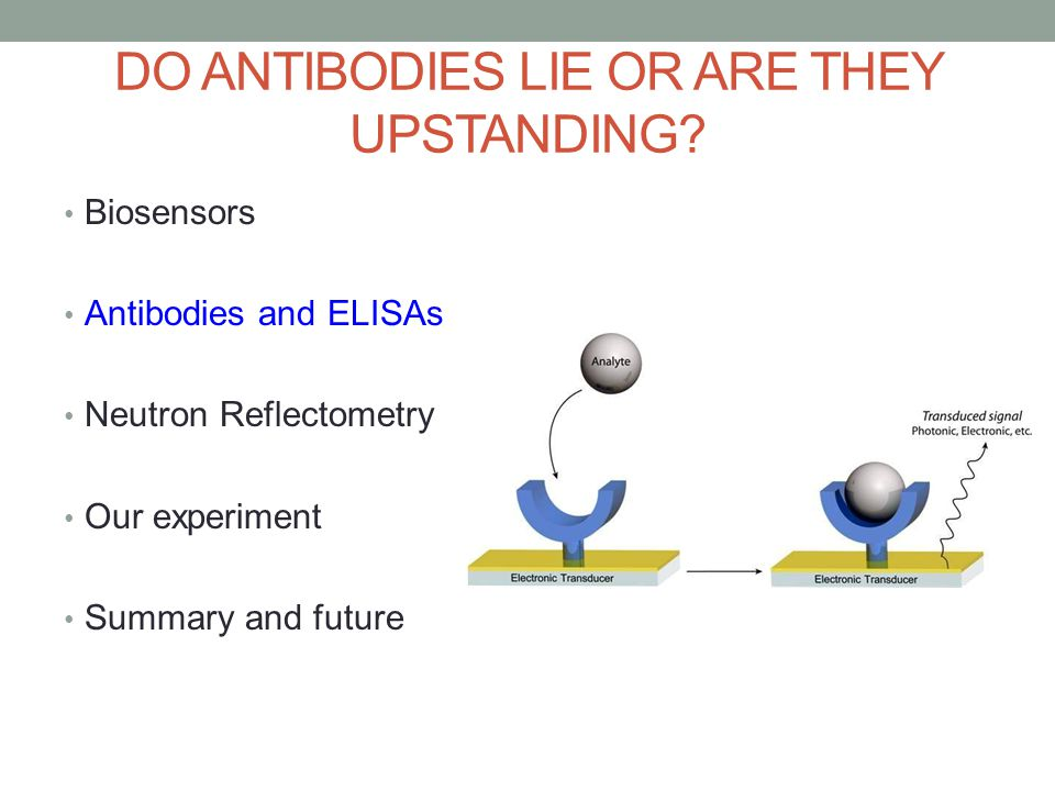 DO ANTIBODIES LIE OR ARE THEY UPSTANDING.