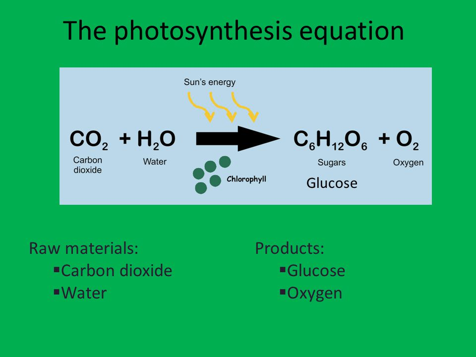 Closure 1.In your own words, what does photosynthesis mean.