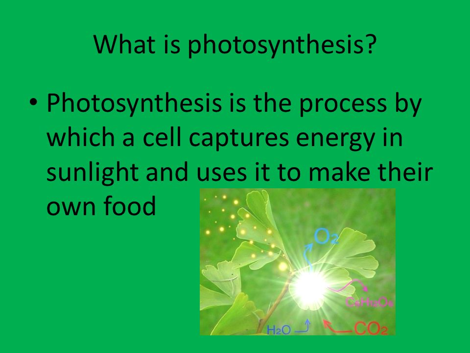 What is Stage One of Photosynthesis.