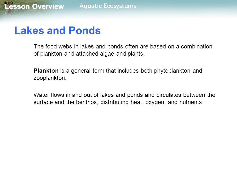 Lesson Overview Lesson Overview Aquatic Ecosystems Freshwater Wetlands A wetland is an ecosystem in which water either covers the soil or is present at or near the surface for at least part of the year.