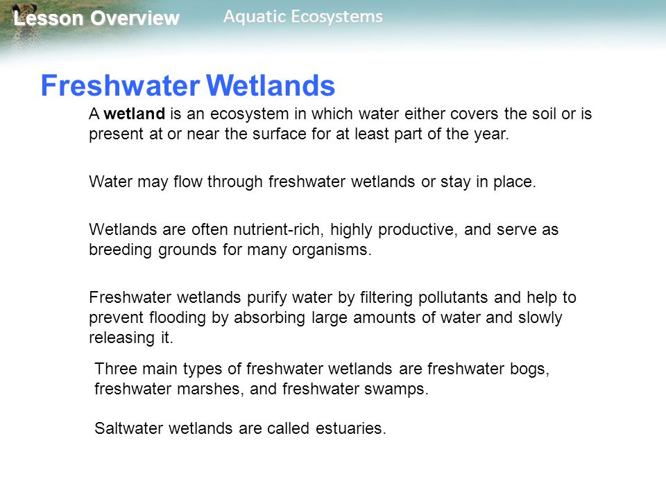 Lesson Overview Lesson Overview Aquatic Ecosystems Estuaries An estuary is a special kind of wetland, formed where a river meets the sea.