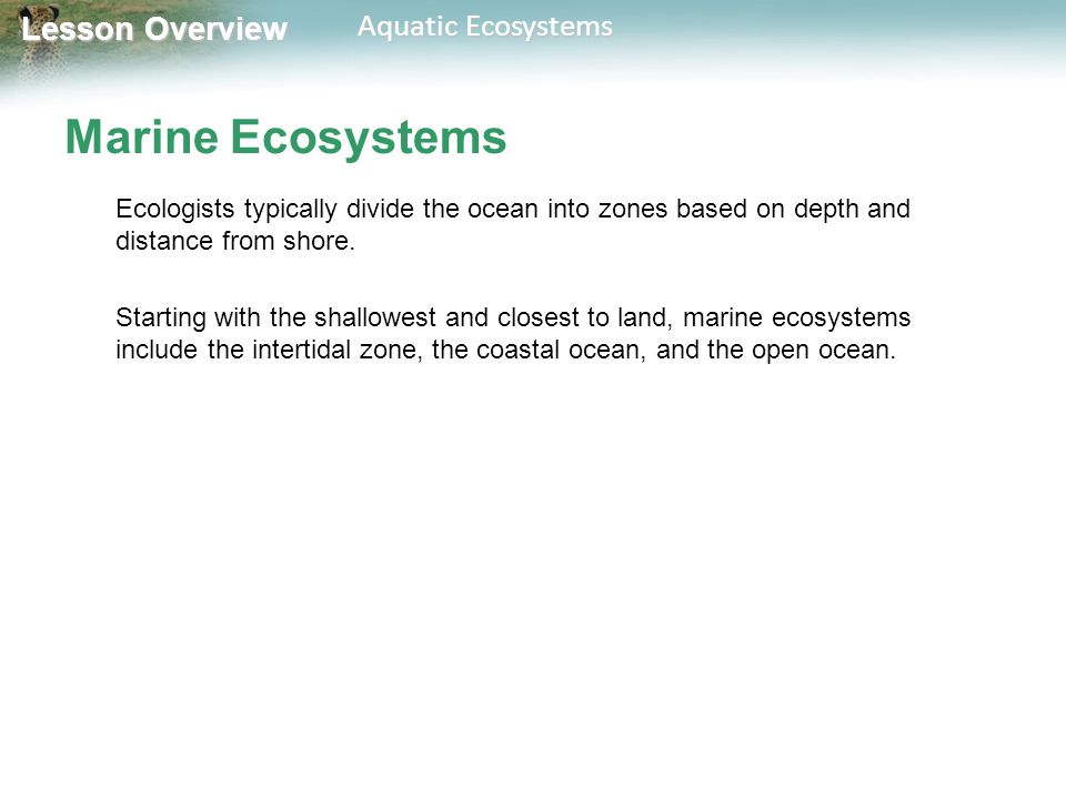 Lesson Overview Lesson Overview Aquatic Ecosystems Intertidal Zone Organisms in the intertidal zone are submerged in seawater at high tide and exposed to air and sunlight at low tide.