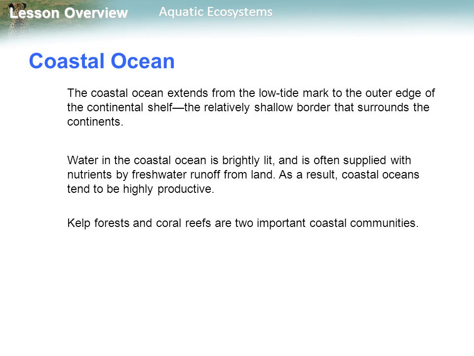 Lesson Overview Lesson Overview Aquatic Ecosystems Open Ocean The open ocean begins at the edge of the continental shelf and extends outward.