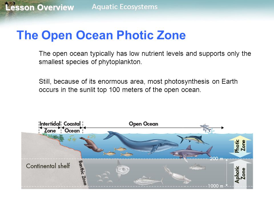 Lesson Overview Lesson Overview Aquatic Ecosystems The Open Ocean Aphotic Zone The permanently dark aphotic zone includes the deepest parts of the ocean.