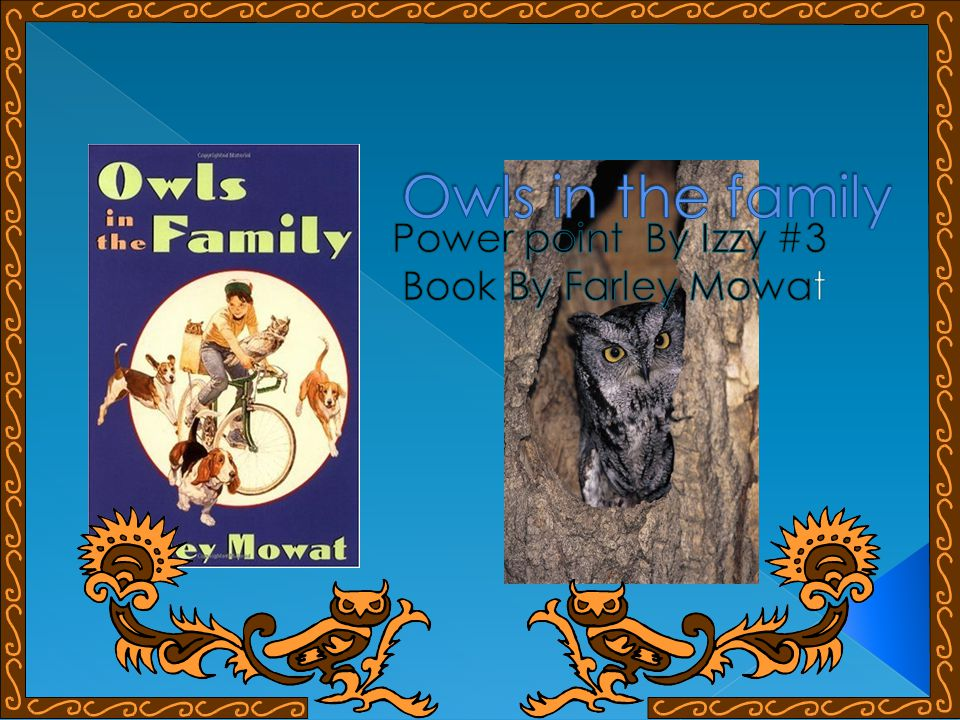 The two boys Billy and Bruce are out on a hot summer day searching for a baby pet owl of their own.