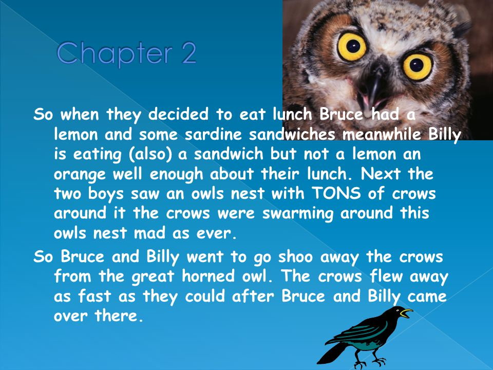Bruce and Billy are walking home when Bruce says LOOKEE!! and he sees an owls nest then Billy says I bet that's just an old crows nest and the boys are too tired to climb up the tree so they decide to bring back their teacher Mr.