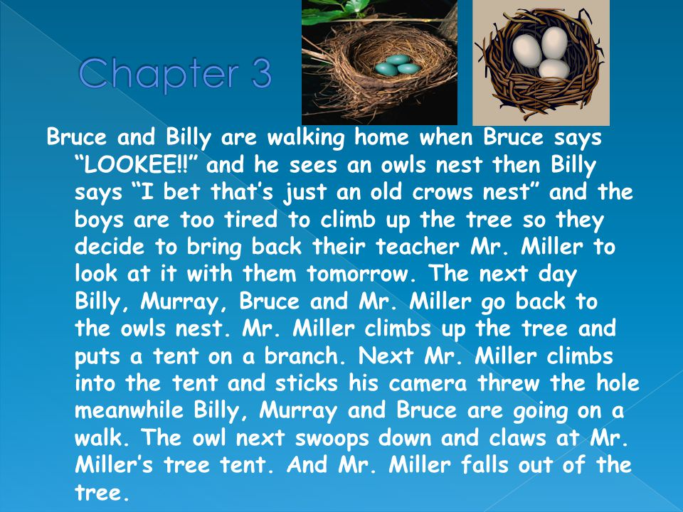 Next a big storm comes and knocks the owls nest out of the tree and the next day Bruce and Billy go and look for the owls nest its broken on the ground with 2 dead owls in it.