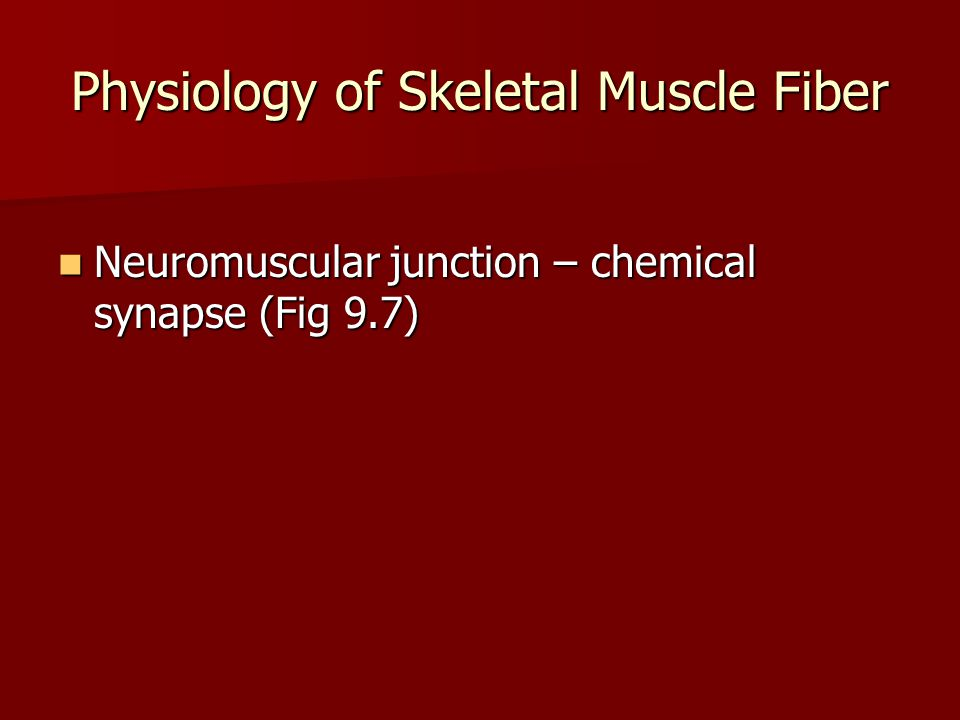 Physiology of Skeletal Muscle Fiber Neural Stimulation Neural Stimulation –Motor neuron generates electrical impulse (AP) that travels down the axon to the synapse.