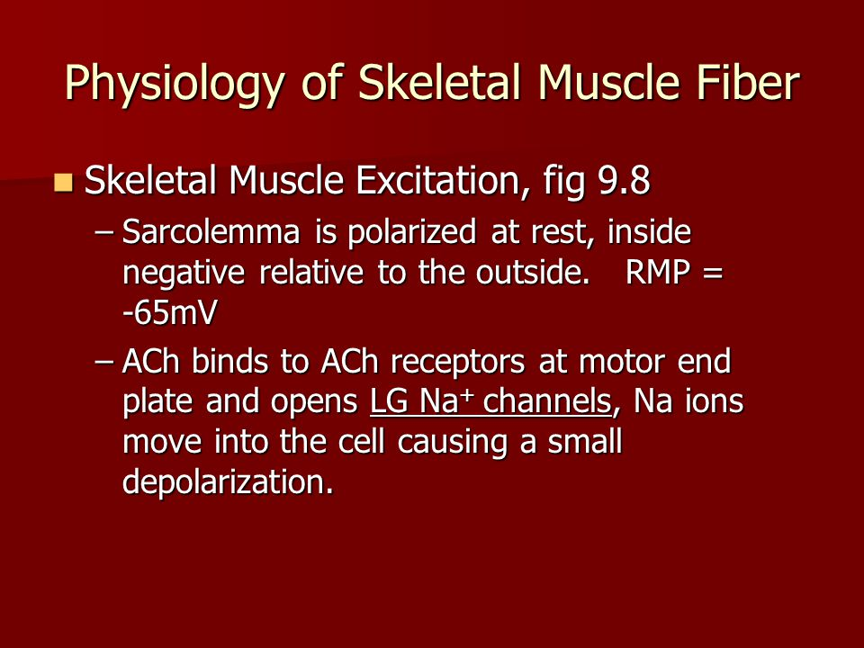 Physiology of Skeletal Muscle Fiber Excitation cont'd Excitation cont'd –At threshold potential, VG Na + channels open.