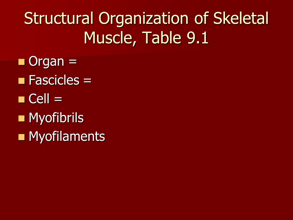 Skeletal Muscle Gross Anatomy Tissues: Tissues: –Blood vessels –Nerves – branches to each fiber –Connective Tissue (Fig 9.2, Table 9.1)  Endomysium –wraps each fiber  Perimysium –wraps fibers into fascicles  Epimysium –wraps fascicles into a muscle  All are continuous with each other and the tendons.