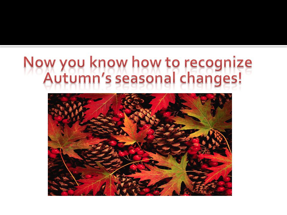 Thanks to Autumn Summers for videotaping Images by Deborah Summers and Microsoft Clip Art This was created using a Power Point Template