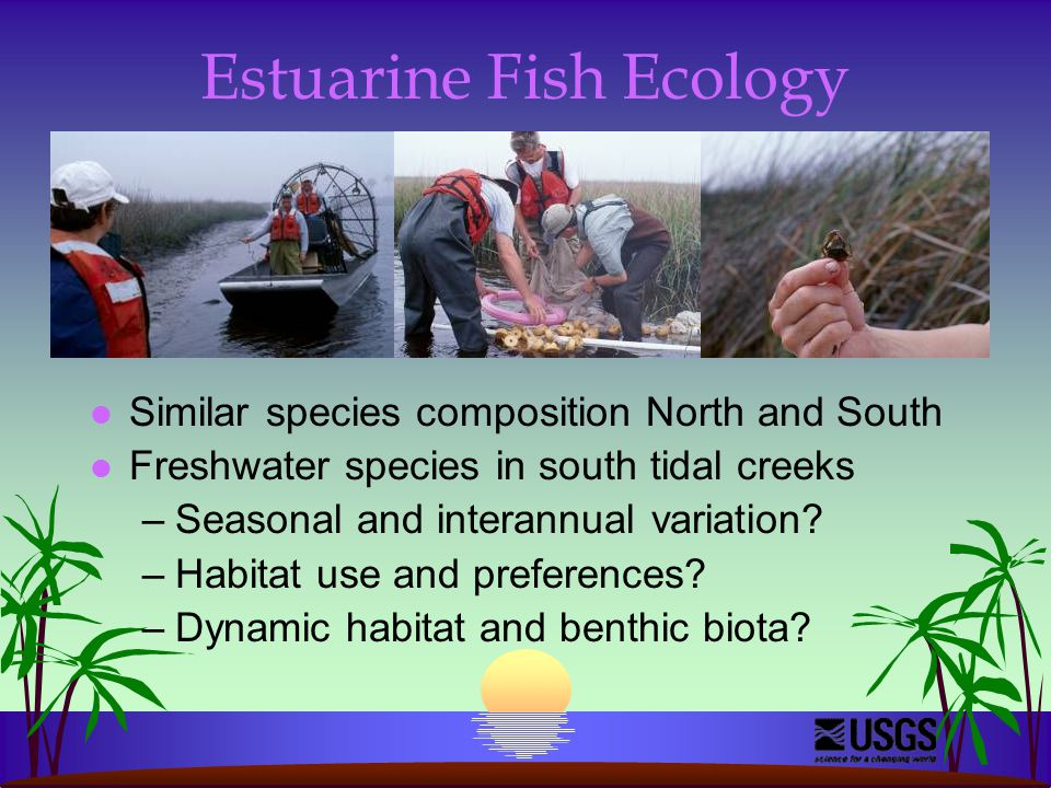 Estuarine Fish Ecology l Similar species composition North and South l Freshwater species in south tidal creeks –Seasonal and interannual variation.