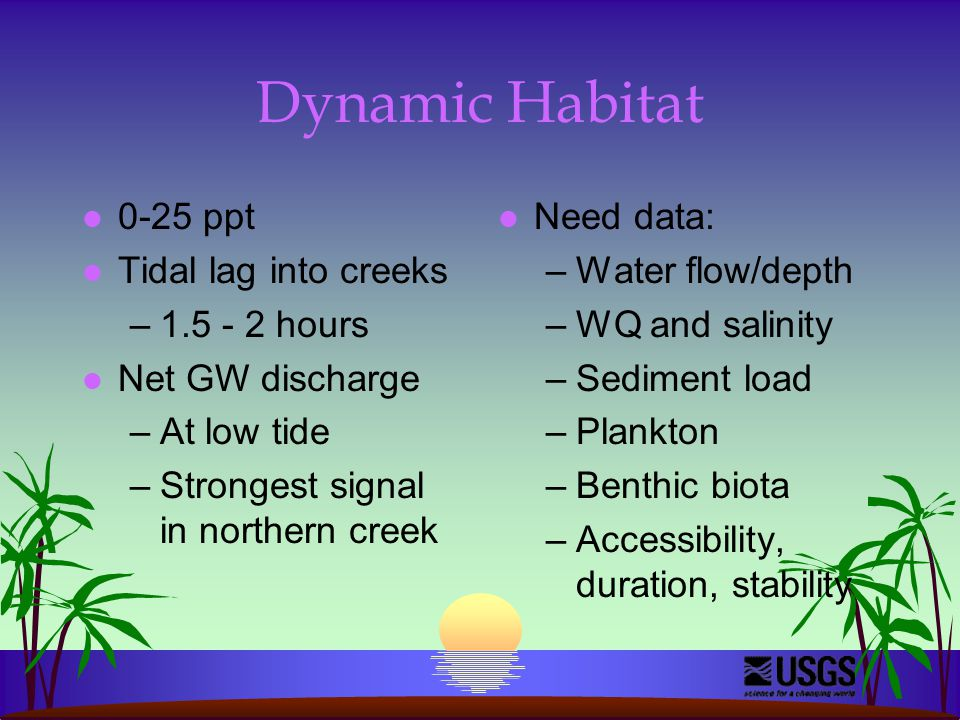 Dynamic Habitat l 0-25 ppt l Tidal lag into creeks –1.5 - 2 hours l Net GW discharge –At low tide –Strongest signal in northern creek l Need data: –Water flow/depth –WQ and salinity –Sediment load –Plankton –Benthic biota –Accessibility, duration, stability