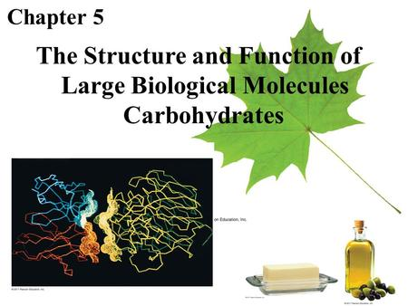 Chapter 5 The Structure and Function of Large Biological Molecules Carbohydrates.