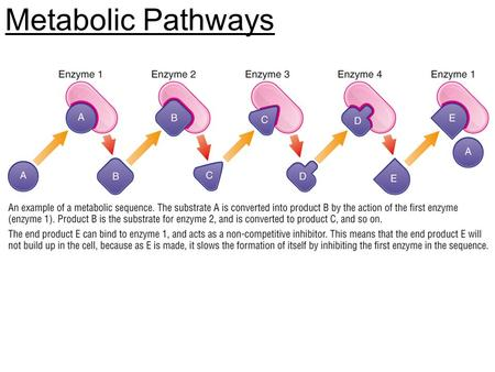 Metabolic Pathways. Inborn Errors Interfering with Poisons and Drugs You will be split into 5 groups Each group is going to become experts in their field,