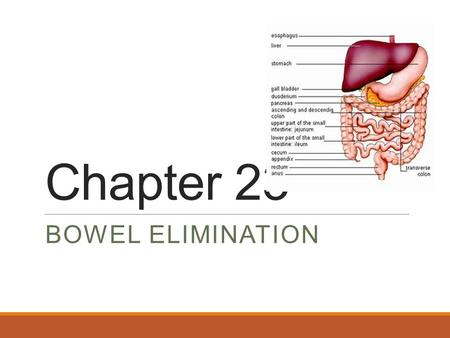 Chapter 23 BOWEL ELIMINATION. Bowel Elimination Bowel elimination is the excretion of wastes from the gastro-intestinal (GI) system. Factors affecting.