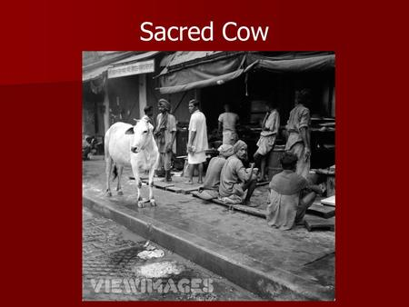 "Sacred Cow. The idiom ""Sacred Cow"" refers to something that cannot be interfered with or harmed in any way. The idiom ""Sacred Cow"" refers to something."