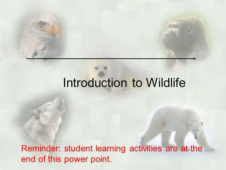Introduction to Wildlife Reminder: student learning activities are at the end of this power point.