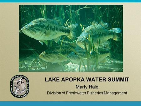 LAKE APOPKA WATER SUMMIT Marty Hale Division of Freshwater Fisheries Management.
