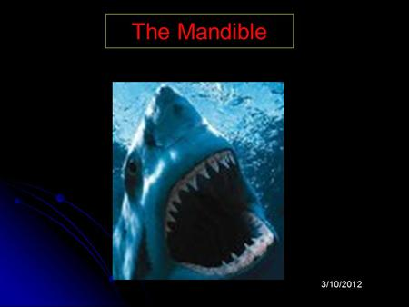 The Mandible 3/10/2012 The mandible is the largest, densest bone of the face.