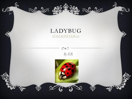 LADYBUG (COLEOPTERA)COLEOPTERA By ER  There are about 4,300 kinds of the ladybug in the world.  Ladybug live in a variety of habitats, including forests,