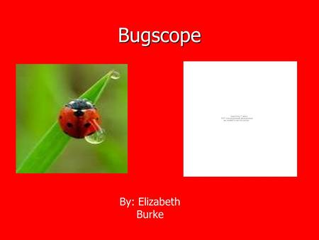 Bugscope By: Elizabeth Burke. Bugscope Pictures The microscope let us look at the extreme details of bugs. Looking at this picture we can see the hair.