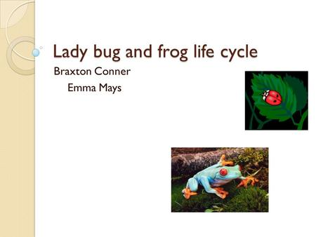 Lady bug and frog life cycle Braxton Conner Emma Mays.