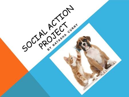 SOCIAL ACTION PROJECT BY NATASHA CURRY. ABOUT ST. ELMO'S VETERINARY CLINIC St. Elmo's veterinary clinic, is a small clinic that deals with a variety of.