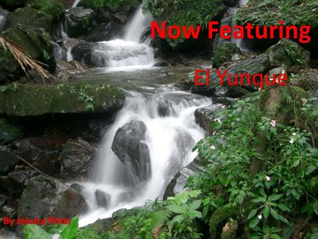 Now Featuring El Yunque By Jessica Potts. What? El Yunque, also known as The Caribbean National Forest, is a tropical rain forest found in eastern Puerto.