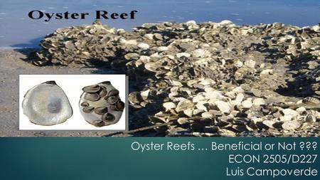 Oyster Reefs … Beneficial or Not ??? ECON 2505/D227 Luis Campoverde.