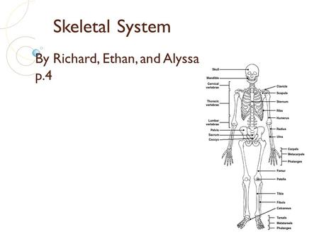 Skeletal System By Richard, Ethan, and Alyssa p.4.