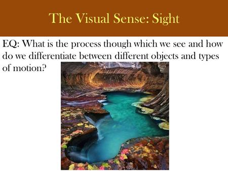 The Visual Sense: Sight EQ: What is the process though which we see and how do we differentiate between different objects and types of motion?