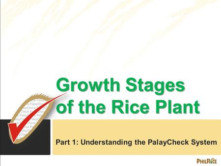 Growth Stages of the Rice Plant