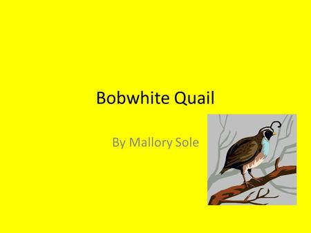 Bobwhite Quail By Mallory Sole. Habitat Lives in Rocky mountains Hilly, no-till grain fields under 20 acres flanked by small woodlots.