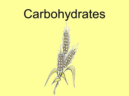 Carbohydrates.  Almost all of our carbohydrates come from PLANT food sources.  We get most of our carbohydrates from the GRAINS group.  FRUITS and.