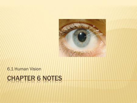 6.1 Human Vision.  Light enters the eye through the pupil  The iris (the coloured part of the eye) controls the amount of light entering the eye  In.