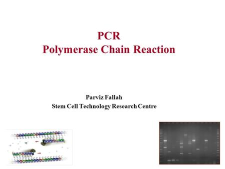 PCR Polymerase Chain Reaction Parviz Fallah Stem Cell Technology Research Centre.
