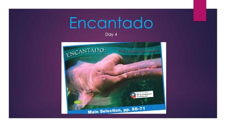 Encantado Day 4 Why do animals behave the way they do?