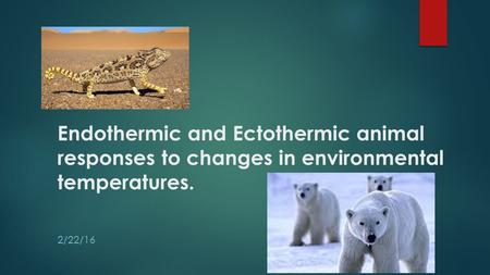 Endothermic and Ectothermic animal responses to changes in environmental temperatures. 2/22/16.