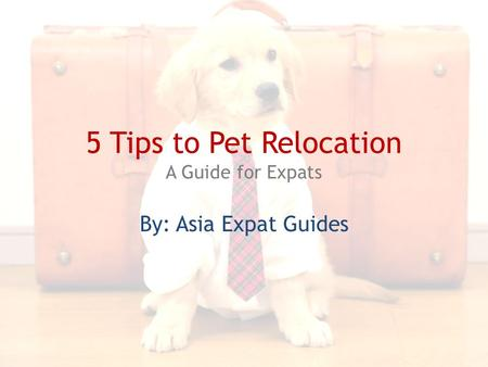 5 Tips to Pet Relocation A Guide for Expats By: Asia Expat Guides.
