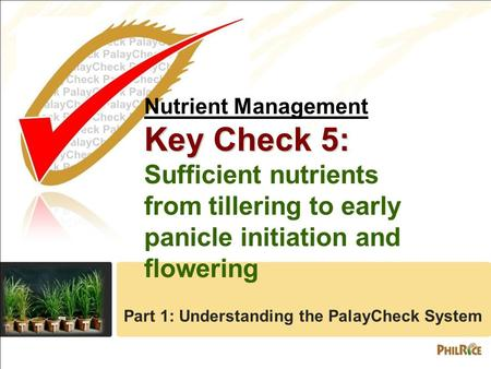 Nutrient Management Key Check 5: Sufficient nutrients from tillering to early panicle initiation and flowering Part 1: Understanding the PalayCheck System.