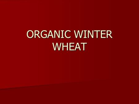 ORGANIC WINTER WHEAT. Ecological area for winter wheat in Romania.