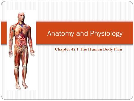 Anatomy and Physiology Chapter 45.1 The Human Body Plan.
