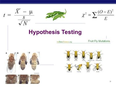 Hypothesis Testing Hypothesis vs Theory  Hypothesis  An educated guess about outcome of an experiment  Theory  An explanation of observed facts that.