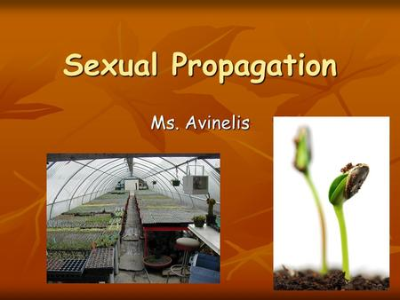 Sexual Propagation Ms. Avinelis. Why Use Seeds for Propagation? Reliable Uniform Crops Reliable Uniform Crops Low Cost Low Cost Easy to Handle Easy to.