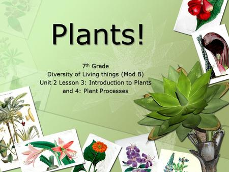 Plants. - ppt download