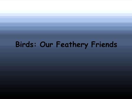 Birds: Our Feathery Friends. Characteristics Birds are versatile animals There are almost 9,000 living species of birds Some birds live in the tropics.